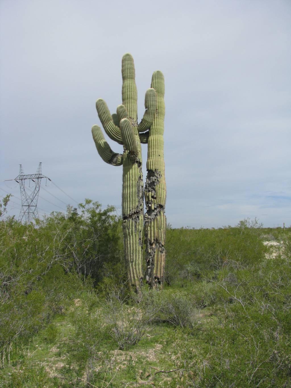 """""""Cache cactus"""""""