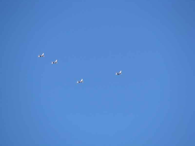 Thunderbird's
